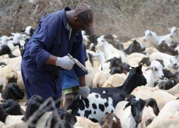 Livestock Production Report