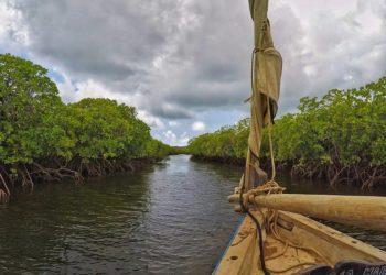 Lamu Mangrove Forest