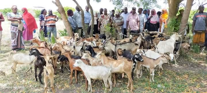 Hindi Ward smallholder livestock farmers benefit