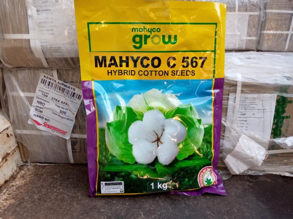FREE HYBRID COTTON SEEDS FOR LAMU COUNTY FARMERS