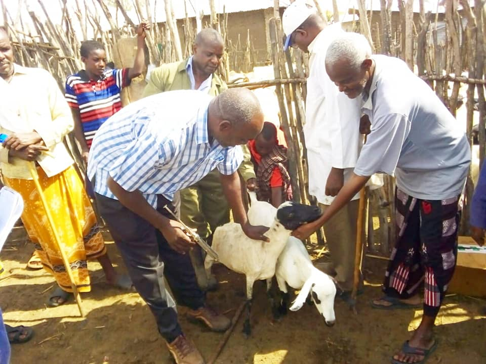 LIVESTOCK VACCINATION; COUNTY MOVES TO PROTECT PASTROLISTS AND LIVESTOCK FARMERS