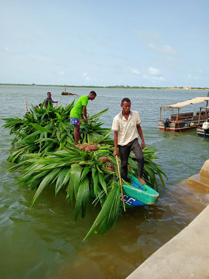 ONGOING FREE COCONUT SEEDLINGS DISTRIBUTION IN LAMU COUNTY